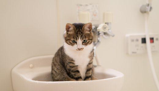 お風呂に入る   例文(2) Me lavo la cara primero.