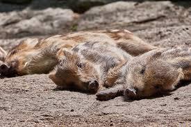 寝る時の表現  例文(2)  Descansa bien.