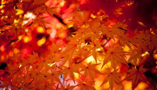 季節を表現する  例文(1)  Japon tiene las 4 estaciones del an~o.