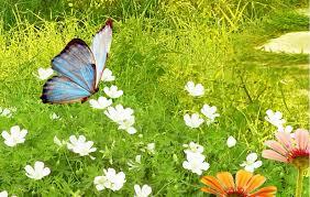 虫についての表現  例文(2)  Te ensen~o mis fotos de mariposas.