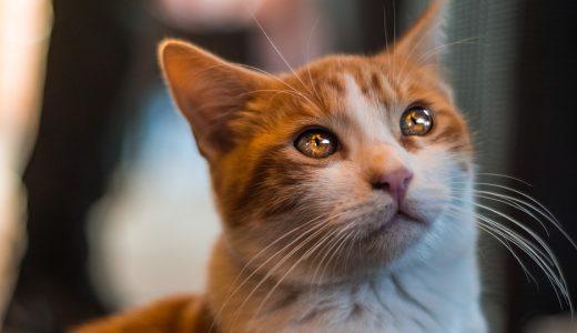 ペットを飼う  例文(3)   Mi gatito es una consolacion.