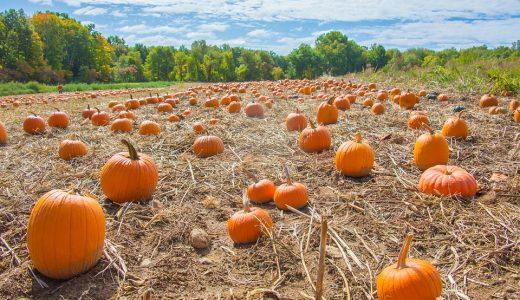 畑仕事に関する表現  例文(2)  El oton~o es la temporada de cosecha.
