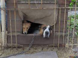 閉じこもる  例文(2)  Mi perro se queda dentro de su jaula.